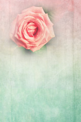 Grungy background with pink rose