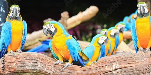Fototapeten,tier,kunst,avian,vogelhaus