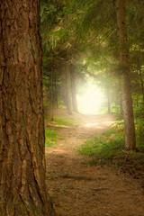 Weg zur Waldlichtung