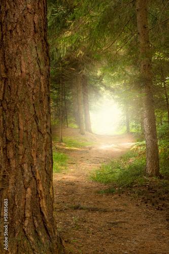Fototapeten,bäume,blatt,lichtung,wald