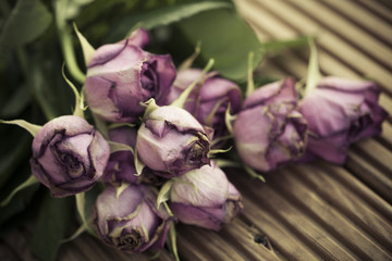 Dying wilted roses on wooden decking background