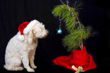 Dog Looking at his Christmas Tree