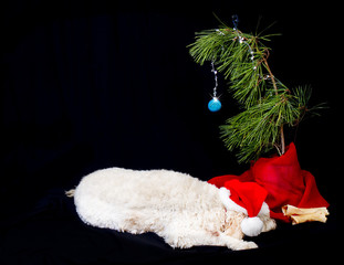 Dog Sleeping under its Christmas Tree