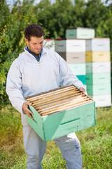 Beekeeper Looking At Honeycomb Crate