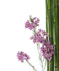 Branch of mini orchid flowers with thin bamboo grove