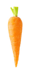 Orange carrots with a tail