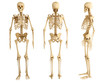 human skeleton, three views - 58100882
