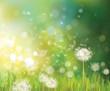 Obrazy na płótnie, fototapety, zdjęcia, fotoobrazy drukowane : Vector of spring background with white dandelions.