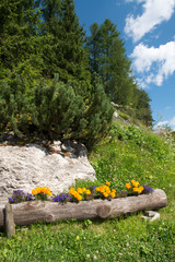 Flowers Colors of Dolomites in Summer Season - Italy