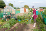 Woman watering the allotment