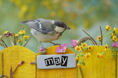 Young Great Tit perched on a decorated fence