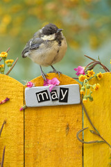 Bird perched on an May decorated fence