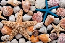 étoiles de mer et coquillages