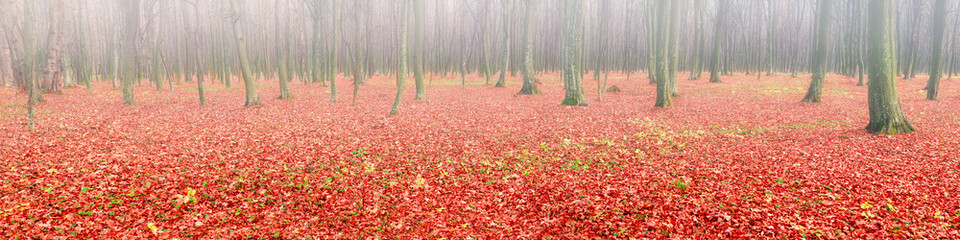 Panorama of autumn forest