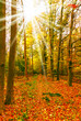 canvas print picture - Herbstwald