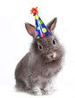 Bunny Rabbit Wearing a Birthday Hat