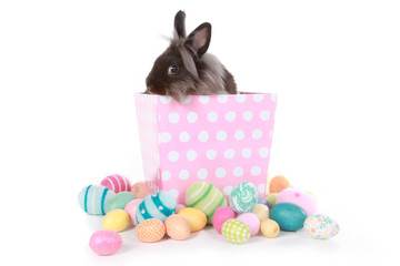 Bunny Rabbit on Pink Polka Dot Box