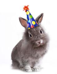 Bunny Rabbit Wearing a Birthday Hat