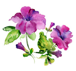 Watercolor purple petunia flowers