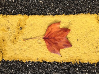 red leaf on a yellow line
