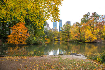Autumn leaves foliage in New York City Central Park