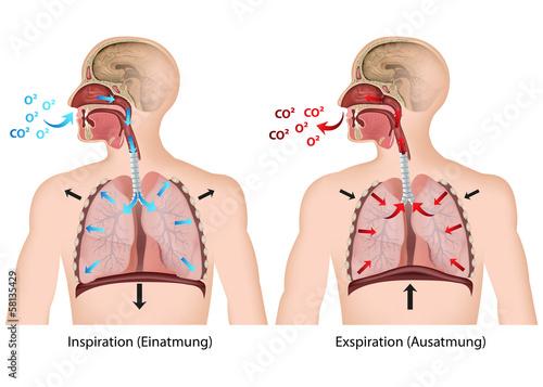 Atmung des Menschen - 58135429