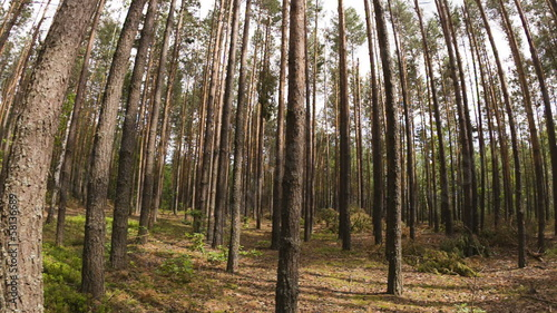 Walking POV in the forest, wide angle