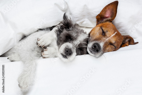 canvas print picture two dogs in love