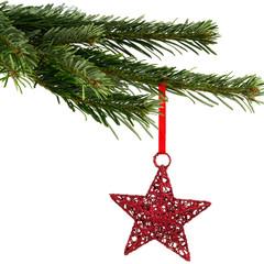 roter Weihnachtsstern am Tannenzweig