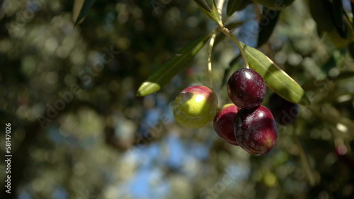 Ripe olives close up