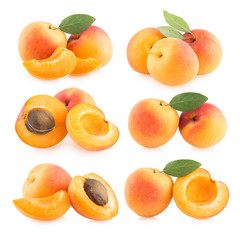 collection of 6 apricot images