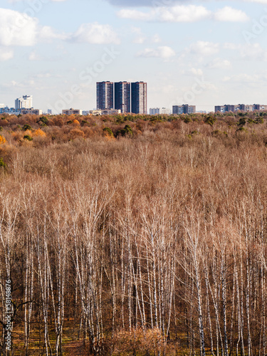 autumn forest with bare trees and urban houses