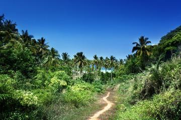 way to beach in jungle, Phi-Phi island, Thailand
