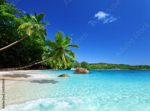 beach at Praslin island, Seychelles © Iakov Kalinin
