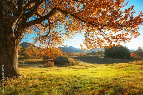 Fototapety, obrazy : Autumn landscape