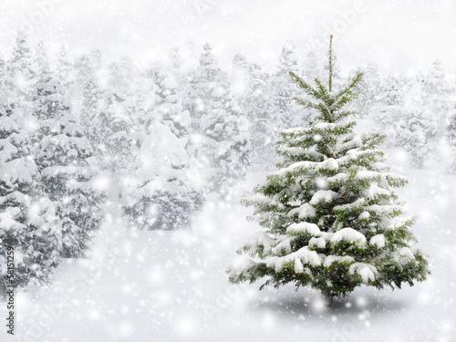 Tuinposter Bomen Tannenbaum in schönem Schneefall