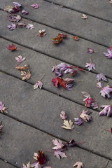 Autumn maple leaves fallen on sidewalk