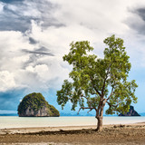 Tree on Seashore