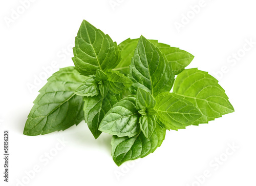Mint leaves in closeup