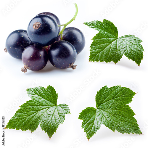 Black currant and leaves isolated. Collection