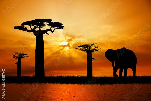 Fototapeten,afrika,tier,hintergrund,elefant