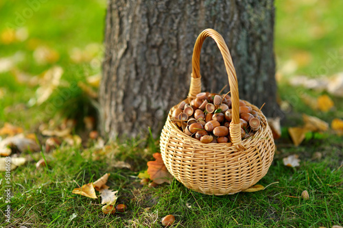 A basket full of acorns for crafting and playing