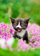 Adorable meowing kitten in the flowers