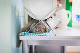 Lazy cat lying under the dish drainer in the kitchen poster
