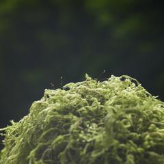 ball of moss