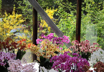 Big mix of amazing orchids