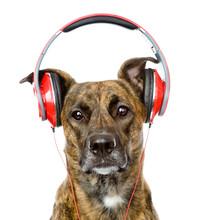 chien écouter de la musique sur un casque. isolé sur blanc