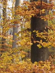 Herbstliche Waldlandschaft