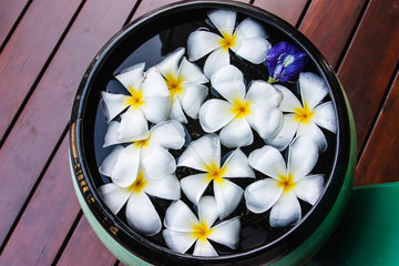 Plumeria flowers in the basin