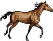 racehorse